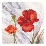 Poppy Splendor 1 Prints by  DB Studios