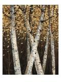 Shimmering Birches 1 Giclee Print by Arnie Fisk