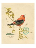 Gilded Songbird 3 Print by Chad Barrett