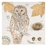 Ural Owl Kunstdrucke von Chad Barrett