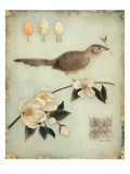 Blossom Recollection Giclee Print by Regina-Andrew Design