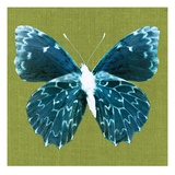 Green Pop Butterfly Posters by Christine Caldwell