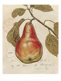 Pear Etching Poster von Chad Barrett