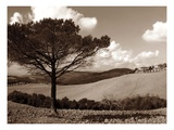 Tuscan Tree Print by Ilona Wellman