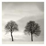 Winter Solstice Detail 1 Poster von Ilona Wellman