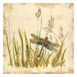 Dragonfly Meadow Posters par Bella Dos Santos