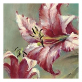 Blooming Lily Print by Brent Heighton