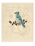 Filigree Jay Giclee Print by Chad Barrett