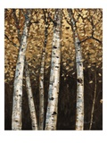 Shimmering Birches 2 Prints by Arnie Fisk