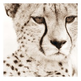 Cheetah Pattern Giclee Print by Frank &amp; Susann Parker