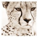 Cheetah Pattern Art by Frank & Susann Parker