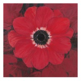Single Red Anemone Art by  Ivo
