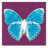 Purple Pop Butterfly Giclee Print by Christine Caldwell