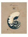 Vintage Linen Nautilus Giclee Print by Regina-Andrew Design 
