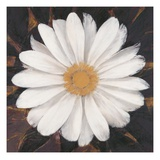Magical White Daisy Giclee Print by Ivo