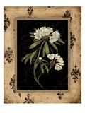 Silver Rhododendron Giclee Print by Regina-Andrew Design 