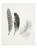 Field Study Feather Trio Art by Jurgen Gottschlag