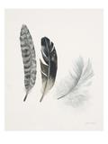 Field Study Feather Trio Arte por Jurgen Gottschlag