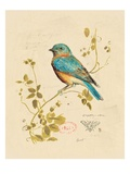 Gilded Songbird 4 Prints by Chad Barrett