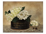 Park Avenue Hydrangea Reproduction proc&#233;d&#233; gicl&#233;e par Cristin Atria