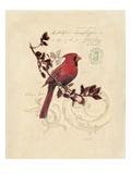 Filigree Cardinal Reproduction procédé giclée par Chad Barrett