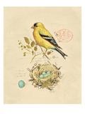 Gilded Songbird 2 Affiches par Chad Barrett