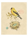 Gilded Songbird 2 Prints by Chad Barrett