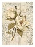 Magnolia Etching Poster von Chad Barrett