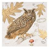 Great Horned Owl Poster von Chad Barrett