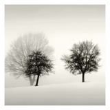 Winter Light Detail Prints by Ilona Wellman