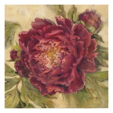 Scarlet Peony Giclee Print by Kathryn White