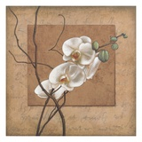 Golden Orchid II Giclee Print by Lee Carlson