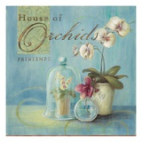 House of Orchids Posters by Angela Staehling