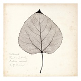 Cottonwood Leaf Giclee Print by Booker Morey