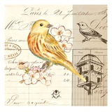Bird Sketch 2 Prints by Chad Barrett