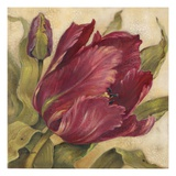 Scarlet Tulip Giclee Print by Kathryn White