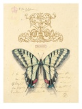Filigree Papillon Prints by Chad Barrett