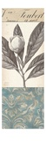 Botanical Bay Laurel Giclee Print by  Chicago Botanic Garden