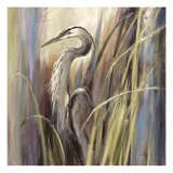 Coastal Heron Plakater af Brent Heighton