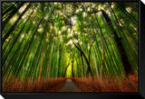 The Bamboo Forest Framed Canvas Print by Trey Ratcliff
