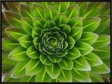 A Giant Lobelia Plant Framed Canvas Print by George F. Mobley