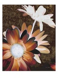 Velvet Daisy 2 Poster by Matina Theodosiou