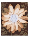 Velvet Daisy 1 Prints by Matina Theodosiou