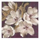 Plum Blossoms 1 Prints by Jurgen Gottschlag
