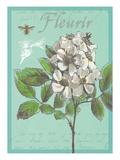 Fleurir Nouveau Prints by Devon Ross
