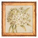 Agapanthus Floret Detail Art by Lauren Hamilton