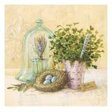 Cook's Garden Kunstdrucke von Angela Staehling