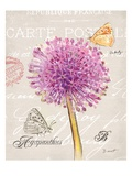 Sketchbook Agapanthus Poster von Chad Barrett