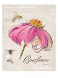 Sketchbook Coneflower Kunstdrucke von Chad Barrett