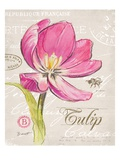 Sketchbook Tulip Poster by Chad Barrett